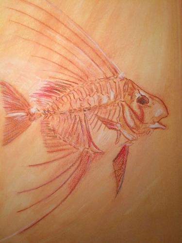 POISSON ROUGE pastel craie sur papier 50x39